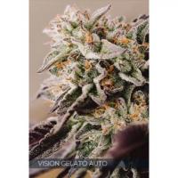 Vision Gelato Auto Feminised Cannabis Seeds | Vision Seeds