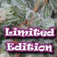 Gorilla OG Feminised Cannabis Seeds | Dr Underground