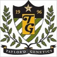 Wobbly Bob Feminised Cannabis Seeds | Taylor'd Genetics Seeds