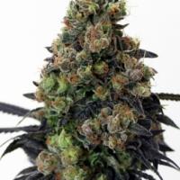 Acid Dough Feminised Cannabis Seeds