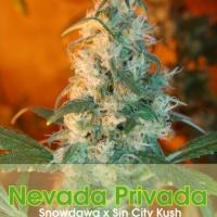 Buy Alphakronik Genes Nevada Privada Cannabis Seeds