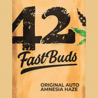 Auto Amnesia Haze Feminised Cannabis Seeds | Fast Buds Originals