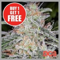 Auto Blue Dream Feminised Cannabis Seeds  | Discount Cannabis Seeds