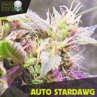 Auto Stardawg Feminised Cannabis Seeds | Black Skull Seeds