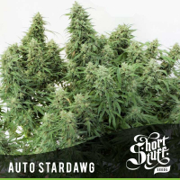 Auto Stardawg Feminised Cannabis Seed | Shortstuff Seeds