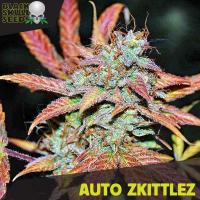 Auto Zkittlez Feminised Cannabis Seeds | Black Skull Seeds