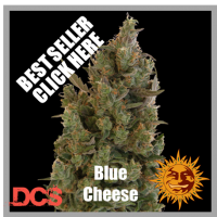 Barney's Farm Blue Cheese Feminised Cannabis Seeds For Sale