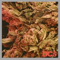 Big Bag Feminised Cannabis Seeds | Feminized Seeds