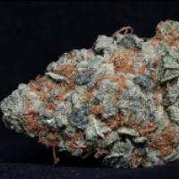 Cookie Dawg Feminised Cannabis Seeds | Big Head Seeds