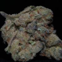 Girl Scout Cookies Feminised Cannabis Seeds | Big Head Seeds