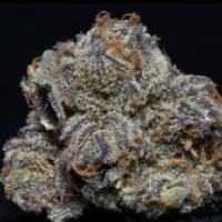 Grandaddy Purple Feminised Cannabis Seeds | Big Head Seeds