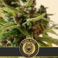 Mamba Negra CBD Auto Feminised Cannabis Seeds| Blim Burn Seeds