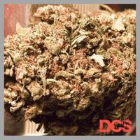 Blue Treacle Auto Feminised Cannabis Seeds | Feminized Seeds