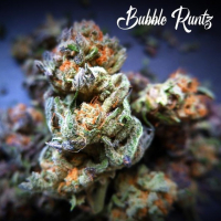 Bubble Runtz Feminised - Tastebudz