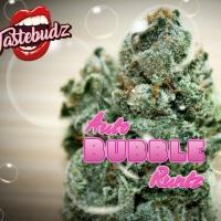 Bubble Runtz Auto Feminised - Tastebudz