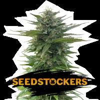 CBG Zerodue Feminised Cannabis Seeds | Seed Stockers