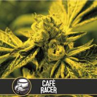 Café Racer Feminised Cannabis Seeds | Blim Burn America
