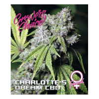Charlottes Dream Feminised Cannabis Seeds - Growers Choice