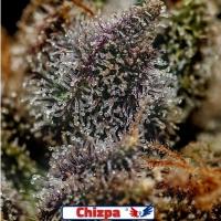Chizpa Feminised Feminised Cannabis Seeds | Positronics