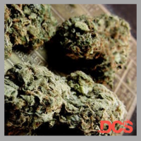 Chronic Feminised Cannabis Seeds | Feminized Seeds