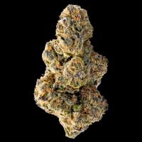 Colossal Purps Feminised Cannabis Seeds - Megabuds