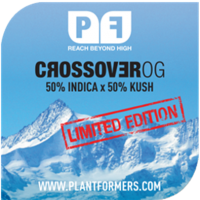 Crossover OG Feminised Cannabis Seeds | Plantformers