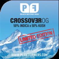 Crossover OG Feminised Cannabis Seeds