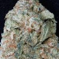 Don OG Kush Feminised Cannabis Seeds   Don Avalanche Seeds