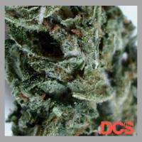 Double Berry Feminised Cannabis Seeds | Feminized Seeds