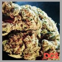 Easy Kush Feminised Cannabis Seeds | Feminized Seeds