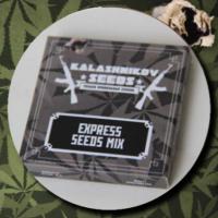 Express Mix Pack Feminised Cannabis Seeds | Kalashnikov Seeds