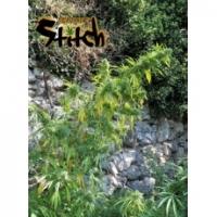 Muay Thai Feminised Cannabis Seeds