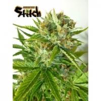 Onyx Feminised Cannabis Seeds