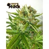 Onyx Feminised Cannabis Seeds