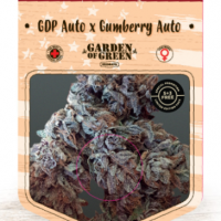 GDP Auto x Gumberry Auto Feminised Cannabis Seeds | Garden of Green