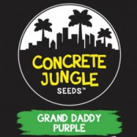 Grand Daddy Purp Feminised | Concrete Jungle Seeds