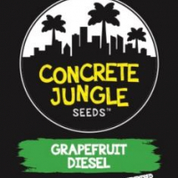 Grapefruit Diesel Feminised | Concrete Jungle Seeds