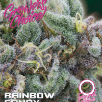 Rainbow Candy Auto Feminised Cannabis Seeds - Growers Choice