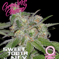 Sweet Tooth x NLX Auto Feminised Cannabis Seeds - Growers Choice