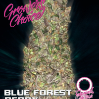 Blue Forest Berry Auto Feminised Cannabis Seeds - Growers Choice