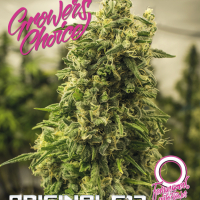 Original G13 Auto Feminised Cannabis Seeds - Growers Choice