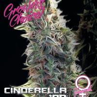 Cinderella '99 Feminised Cannabis Seeds - Growers Choice