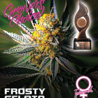 Frosty Gelato Feminised Cannabis Seeds - Growers Choice