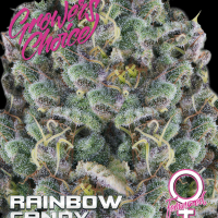 Rainbow Candy Feminised Cannabis Seeds - Growers Choice