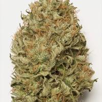 Blue Dream Auto Feminised Cannabis Seeds   Humbolt Seeds Organisation