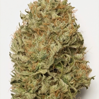Blue Dream Auto Feminised Cannabis Seeds | Humbolt Seeds Organisation
