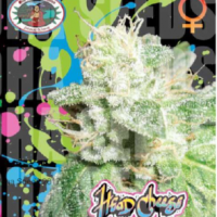 Head Cheese Feminised Cannabis Seeds | Big Buddha Seeds