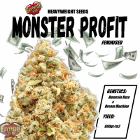 Monster Profit Feminised Cannabis Seeds | Heavyweight Seeds