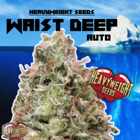 Waist Deep Auto Feminised Cannabis Seeds | Heavyweight Seeds