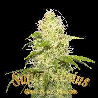 La Jefa Feminised Cannabis Seeds - Super Strains